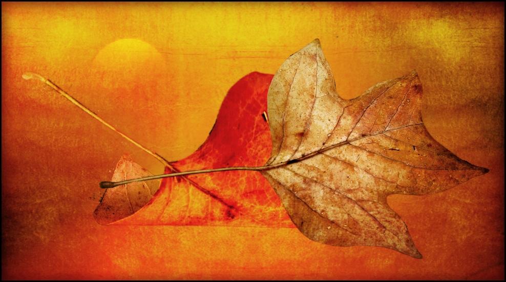 Herbst........