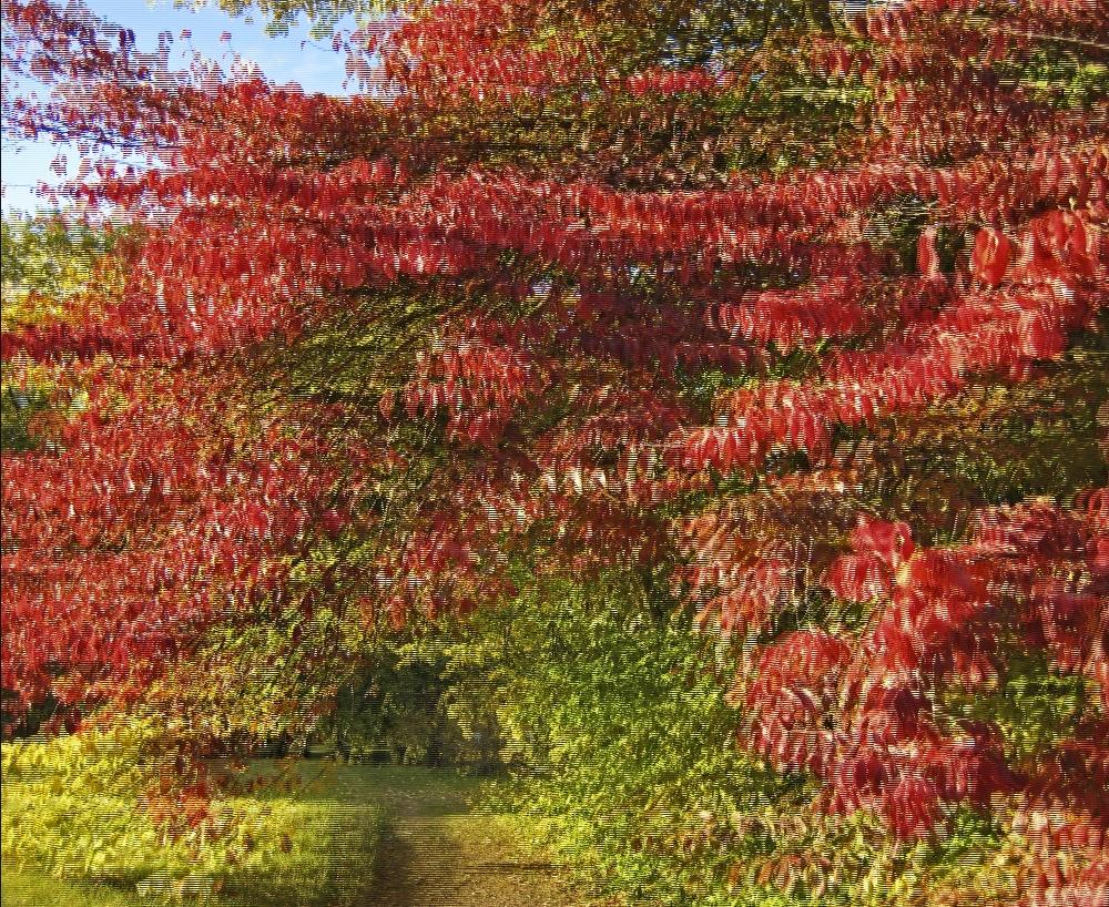 Herbst 2 (3D)