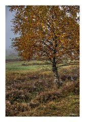 Herbst - 2