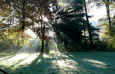 Herbst 2007 (4) Sonne auf den ersten Rauhreif