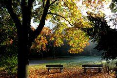 Herbst 2007 (5) - Am frühen Morgen in der Ohligser Heide