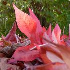 Herbst 2010