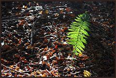 Herbst 2012 - I
