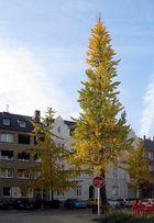 Herbst 2012 in der Stadt ...