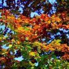 Herbst 2015 #1