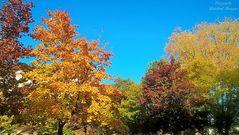 Herbst 2018 - Inidan Summer