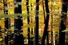 Herbst -25