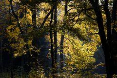 Herbst -26