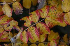 Herbst -27