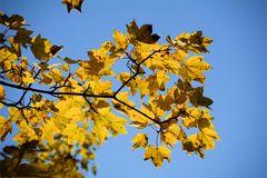 Herbst -3