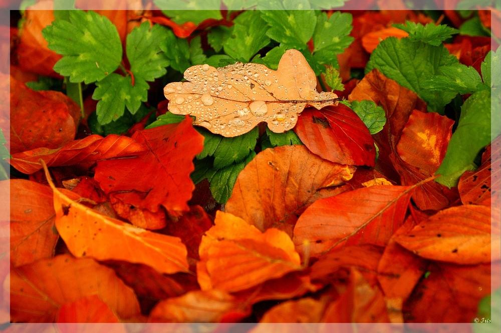 Herbst 3