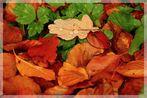 Herbst 3.1