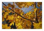 Herbst (4)