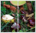 ... Herbst ...