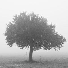 Herbst # 4924