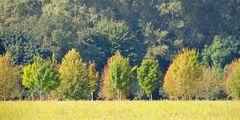 Herbst # 4934