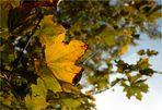 !Herbst!