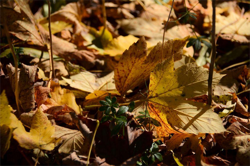 Herbst -6