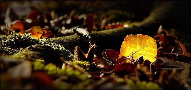 Herbst .....