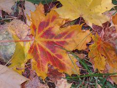 Herbst....