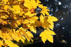 Herbst -7-