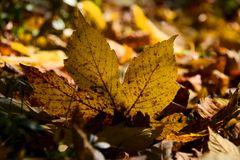 Herbst -7
