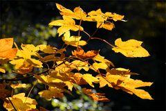 Herbst -8-
