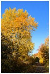 Herbst -8