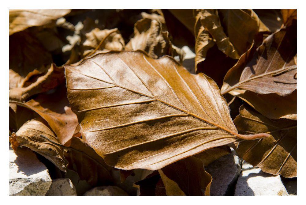 Herbst #8