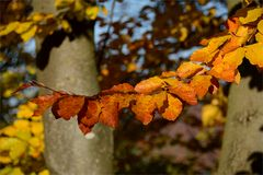 Herbst -9