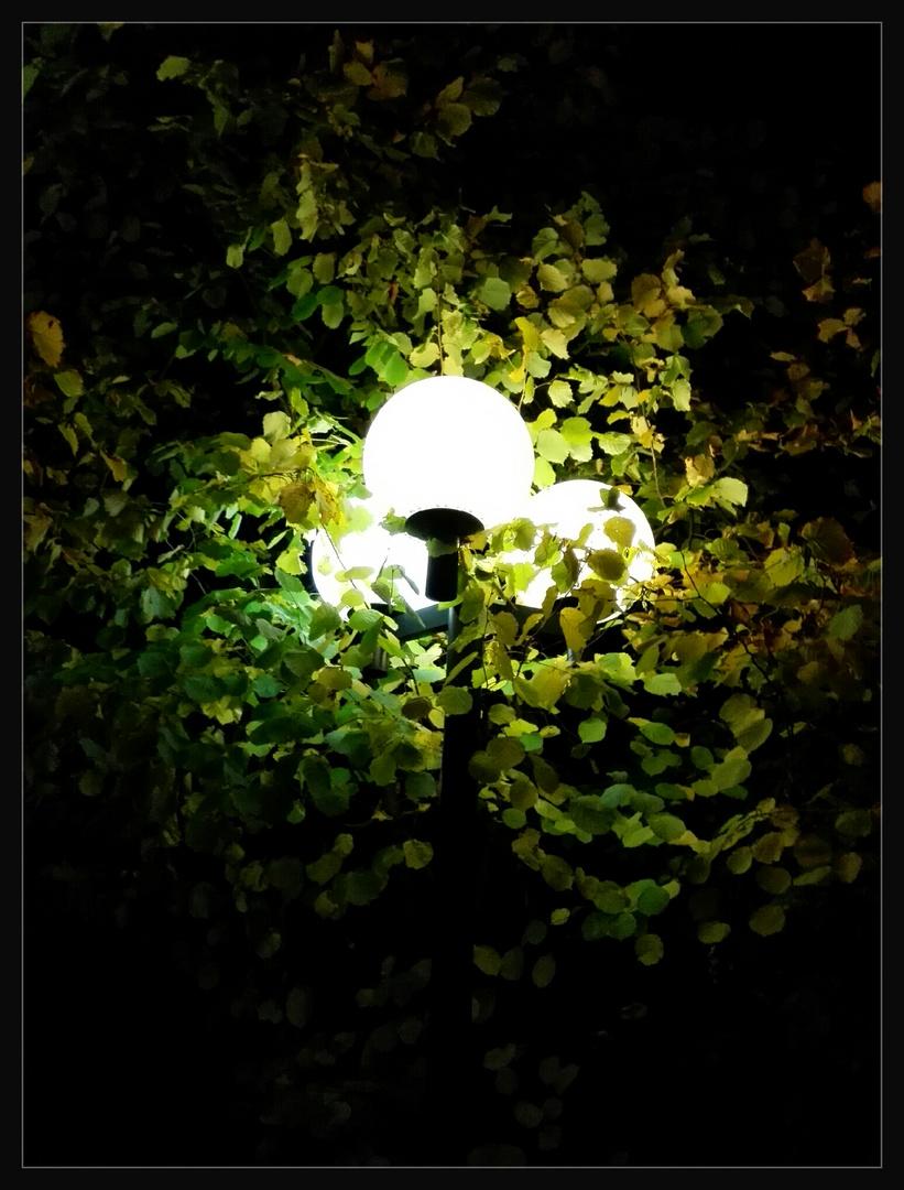 Herbst-Abend