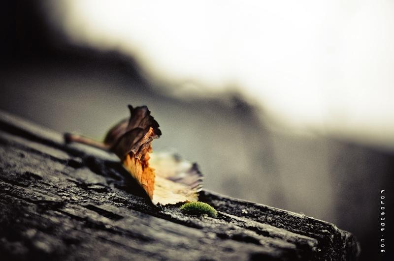 Herbst ade, der Winter wird kommen