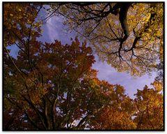Herbst: Als die Blätter noch schön bunt waren.