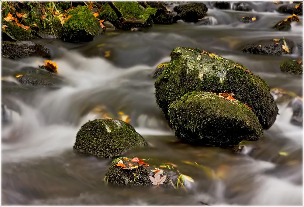 Herbst am Bachlauf