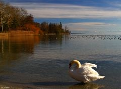 Herbst am Bodensee,
