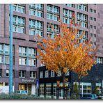 Herbst am BraWoPark #2 - Braunschweig