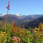 Herbst am Brenner