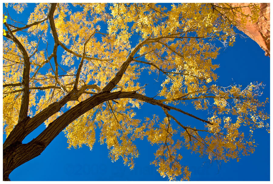 Herbst am Capitol Reef .........