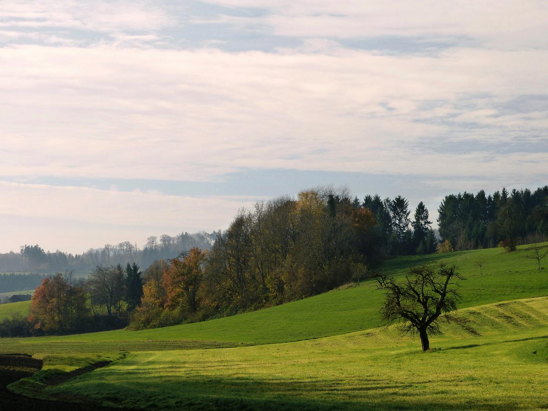 Herbst am Dinkelberg