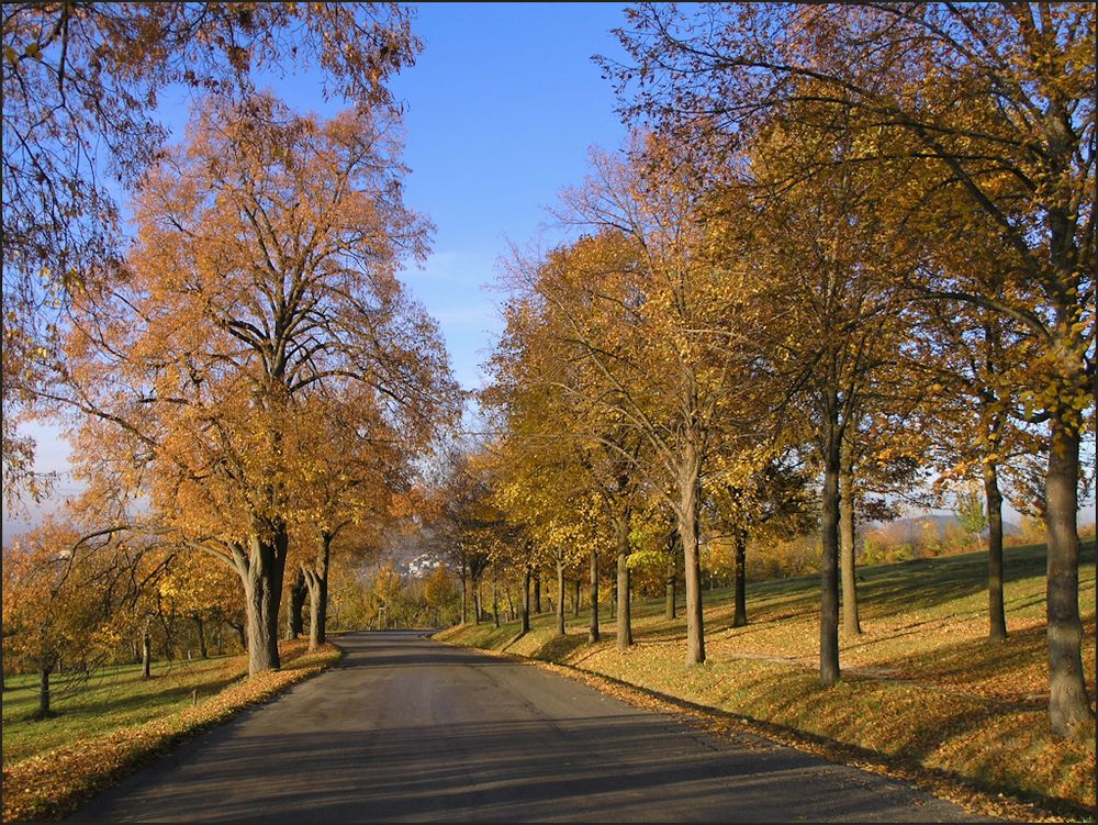 Herbst am Elisenweg (2)