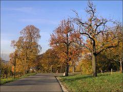 Herbst am Elisenweg (3)