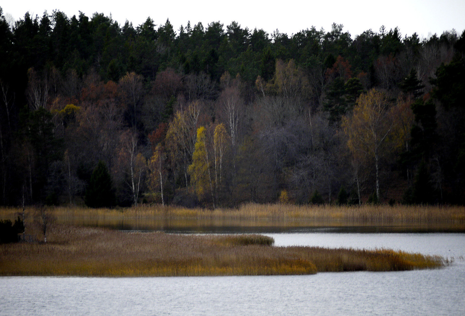 Herbst am Fjord................