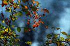 Herbst am Fluss