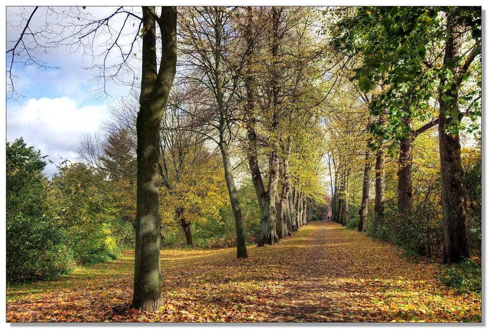 Herbst am Graalwall