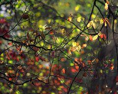Herbst am Groschenwasser