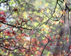 Herbst am Groschenwasser II