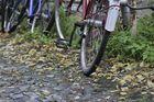Herbst am Hinterrad