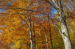 Herbst am Jura