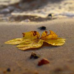 Herbst am Müggelsee