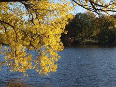 Herbst am Mühlenteich